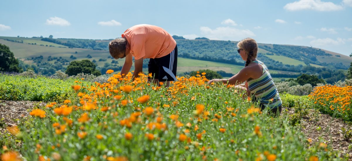 Review of Dorset Herbs