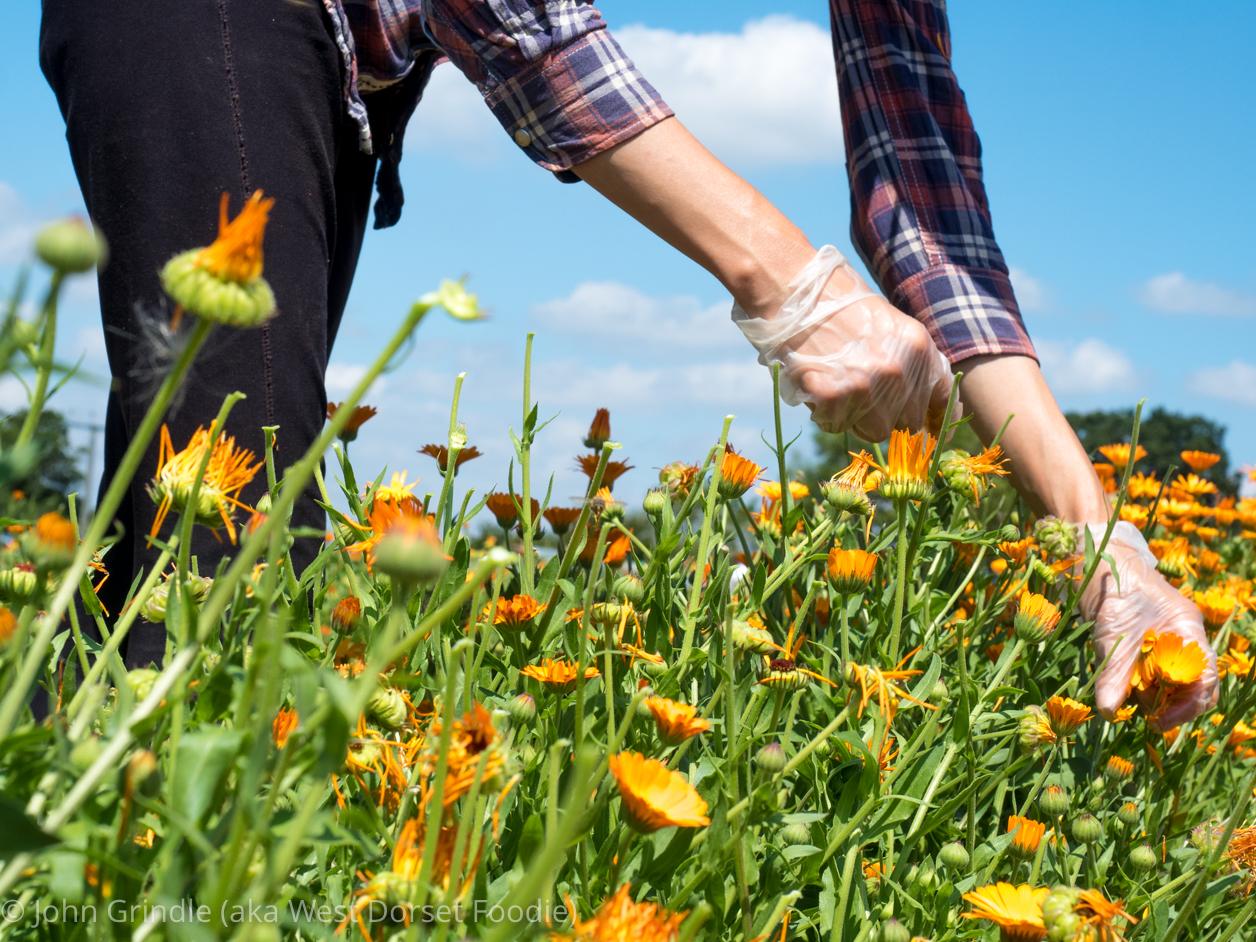 Dorset Herbs Review