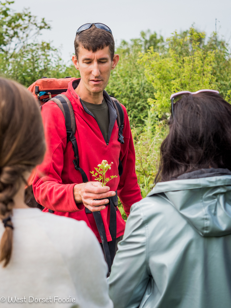 Review of Hedgerow Foraging Courses