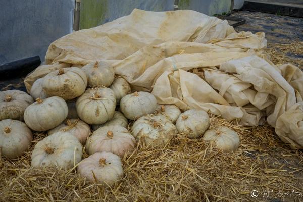 Review of Washingpool Farm Shop in Bridport
