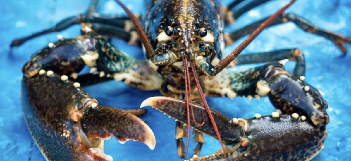 Find your local Fishmongers in Dorset